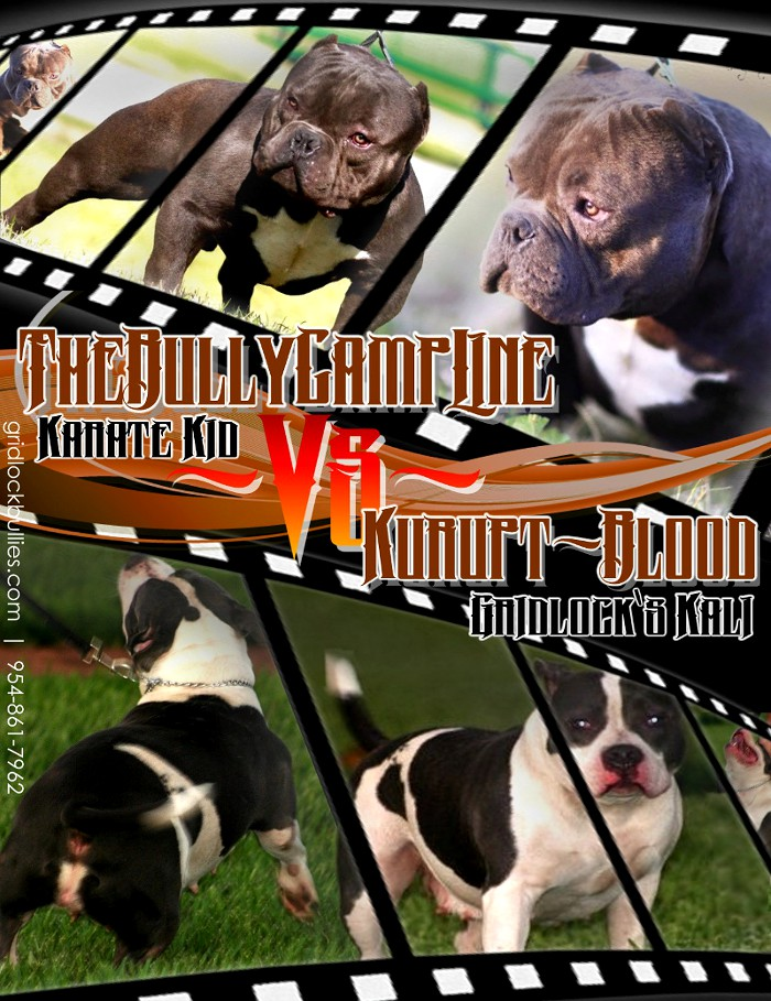 PLEASE NOTE THESE PUPS WILL START AT  5 000Karate Kid American Bully